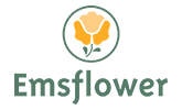 Emsflower-GmbH-Website.jpg